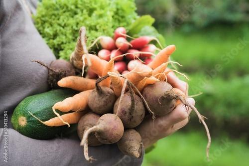 Fototapeta Woman With Freshly Harvested Vegetables obraz