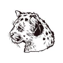 Cougar Baby Tabby, Large Felid Isoated Wildlife Cat Sketch T-shirt Print, Monochrome Design. Vector Illustration Mountain Lion Puma Tiger Catamount. Puma Concolor Cougar Hunting Savanna Season Wildcat