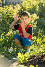 Toddler In The Garden Eats Har...