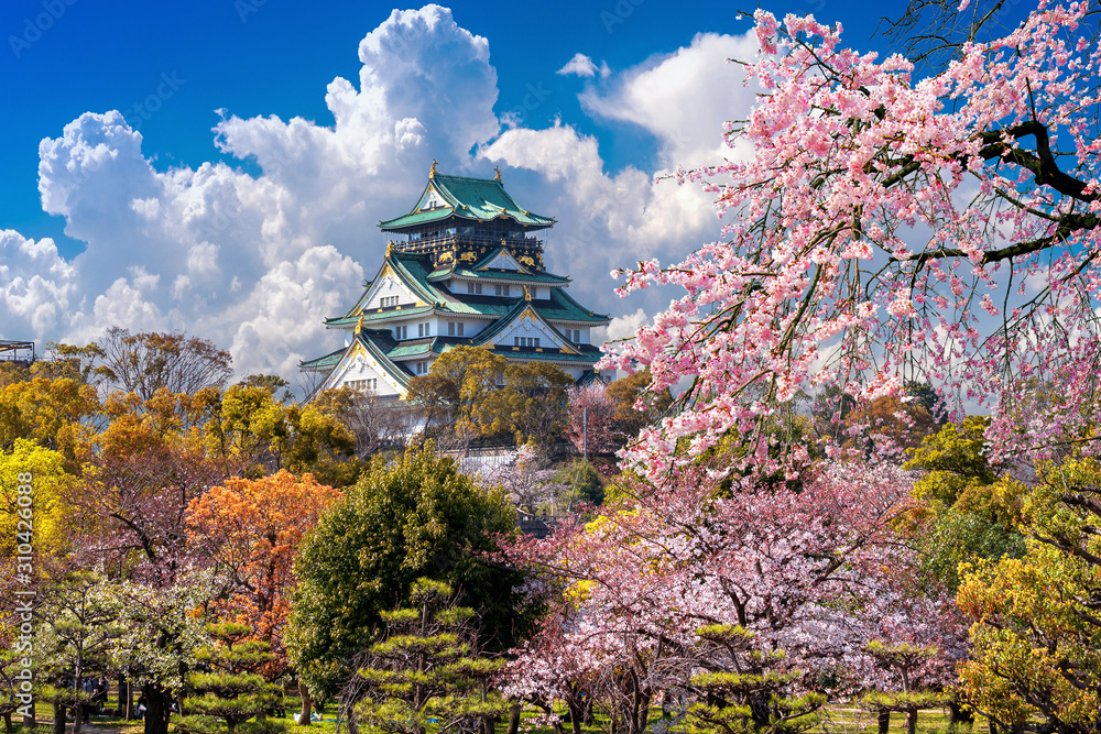 Cherry blossoms and castle in Osaka, Japan. <span>plik: #310426088 | autor: tawatchai1990</span>