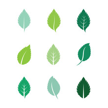 Mint Leaves Flat Vector Color ...