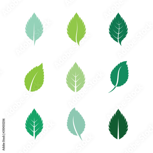 Mint leaves flat vector color icon Wall mural