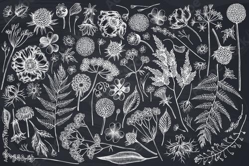 Vector set of hand drawn chalk shepherd's purse, heather, fern, wild garlic, clo Fototapet