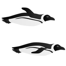 Illustration Of A Penguin Swim...