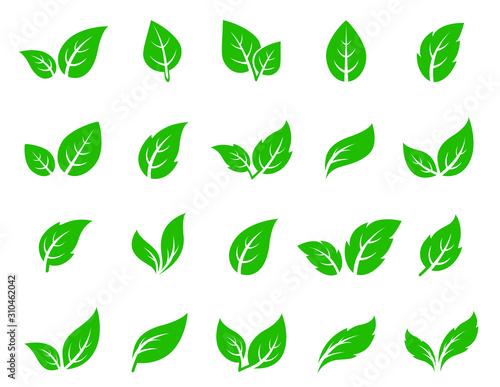Fototapety, obrazy: hand drawn veined green leaf icon eco set