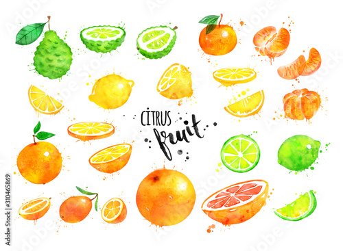 Watercolor collection of citrus fruit