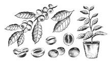 Illustration Set Of Coffee Bea...