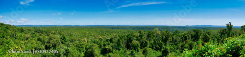 Fotomural  Dense forest with lush foliage in Koh Kong Province in Cambodia.