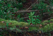 Green Moss Covered Log Of A Tree Among Greenery In Hawaii