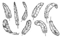 Hand Drawn Sketch Feathers, Bi...