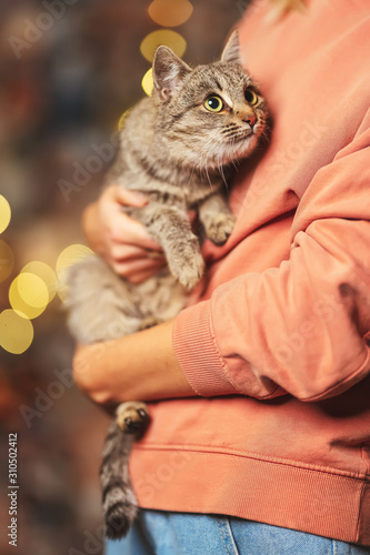 Beautiful mongrel cat on the hands of a girl on the background of bokeh Christmas garlands Fototapete