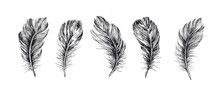Feathers Set. Hand Drawn On Wh...