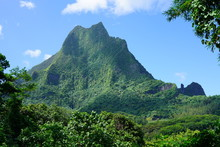Green Landscape View On The Island Of Moorea Near Tahiti In French Polynesia, South Pacific