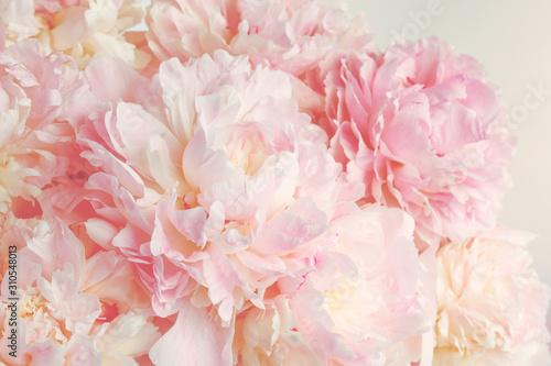 Puszyste różowe piwonie kwiaty tło