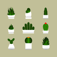 Cacti Collection 2