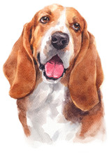 Water Colour Painting Of Basset Hound 147