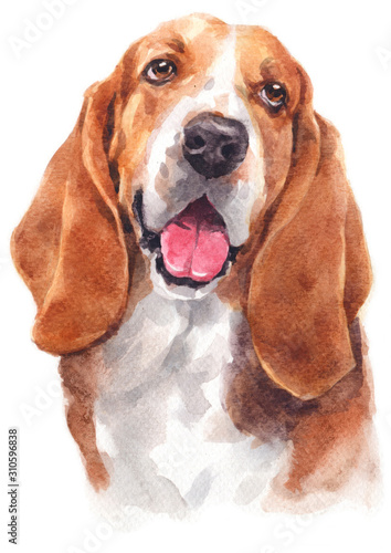 Fotografía Water colour painting of Basset Hound 147