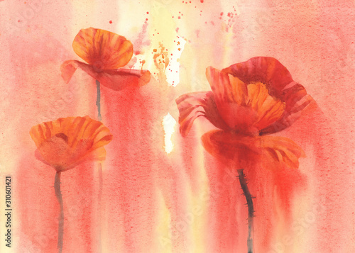 Obraz maki   poppy-flower-field-in-red-background-watercolor-illustration