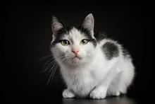 Black And White Cat On Black B...