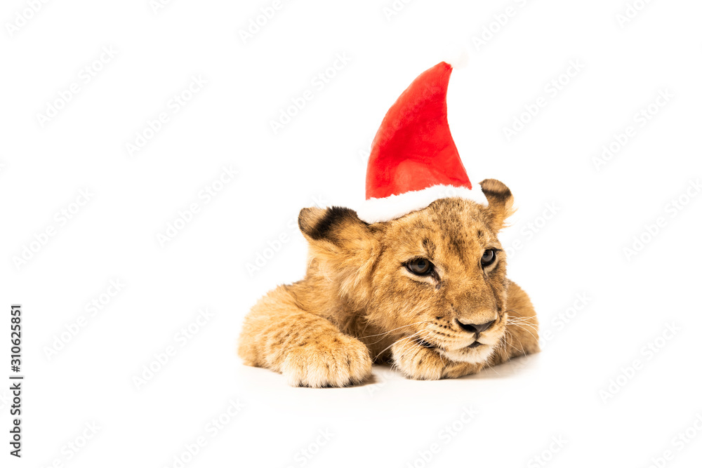 cute lion cub in santa hat isolated on white