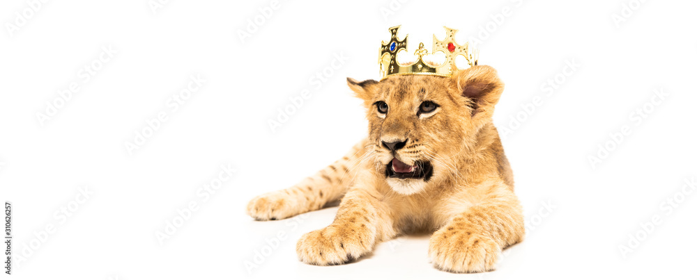 Fototapeta cute lion cub in golden crown isolated on white