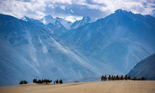 Trip In The Sand Dunes Of Nubra Valley, Ladakh