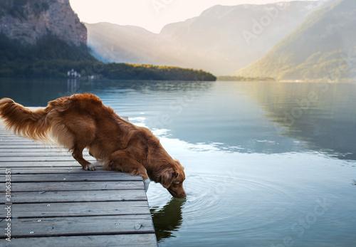 Photo dog on a journey