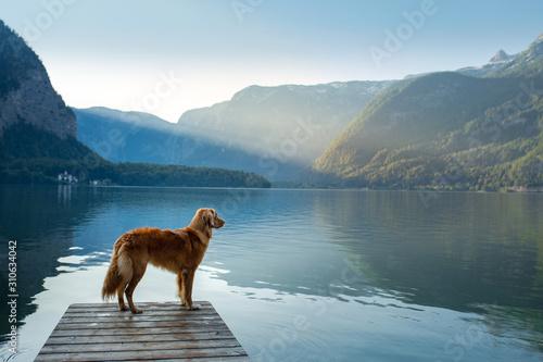 dog on a journey Wallpaper Mural