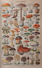 Autumn Forest Mushrooms Scene. Autumn Mushrooms View. Autumn Forest Mushrooms. Mushrooms In Autumn Forest