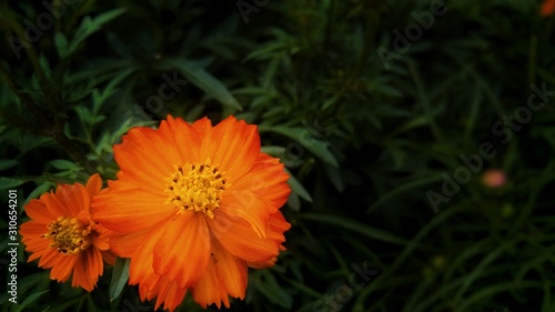 Closeup shot fo an orange flower with a blurred natural background