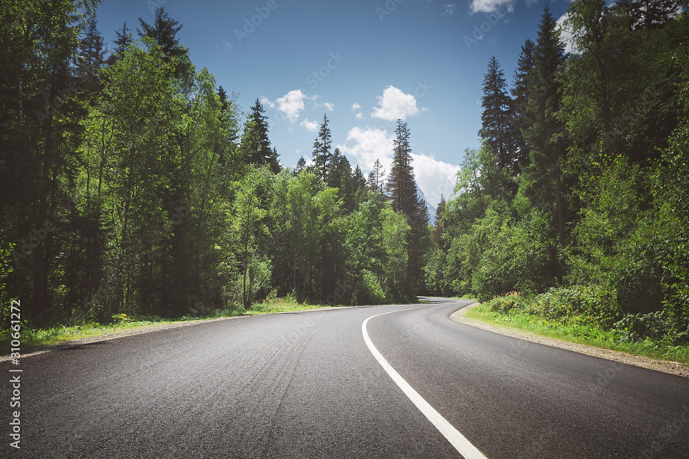Fototapeta country road through forest. summer.