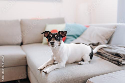 Fototapeta Hund Terrier obraz na płótnie