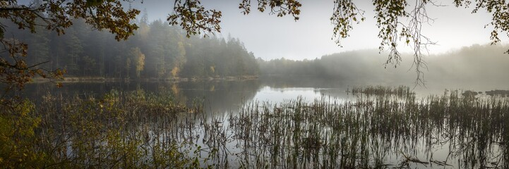 Panoramic view of an eerie lake with tall grass and mysterious forest in the background