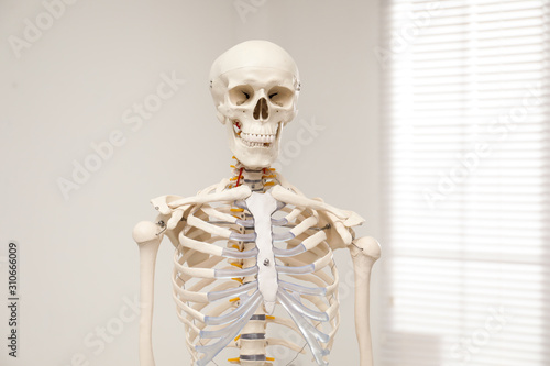 Fotografía  Artificial human skeleton model near window indoors