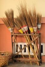Colourfoul Broom In Burma