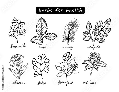 Black and white medical herbs set isolated on white background Canvas Print