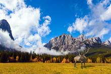 Red Deer Grazes In A Picturesq...