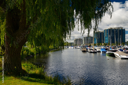 Willow tree over Barrie Ontario Marina on Kempenfelt Bay with boats and condos Wallpaper Mural