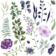 Set Of Watercolor Herbs And Fl...