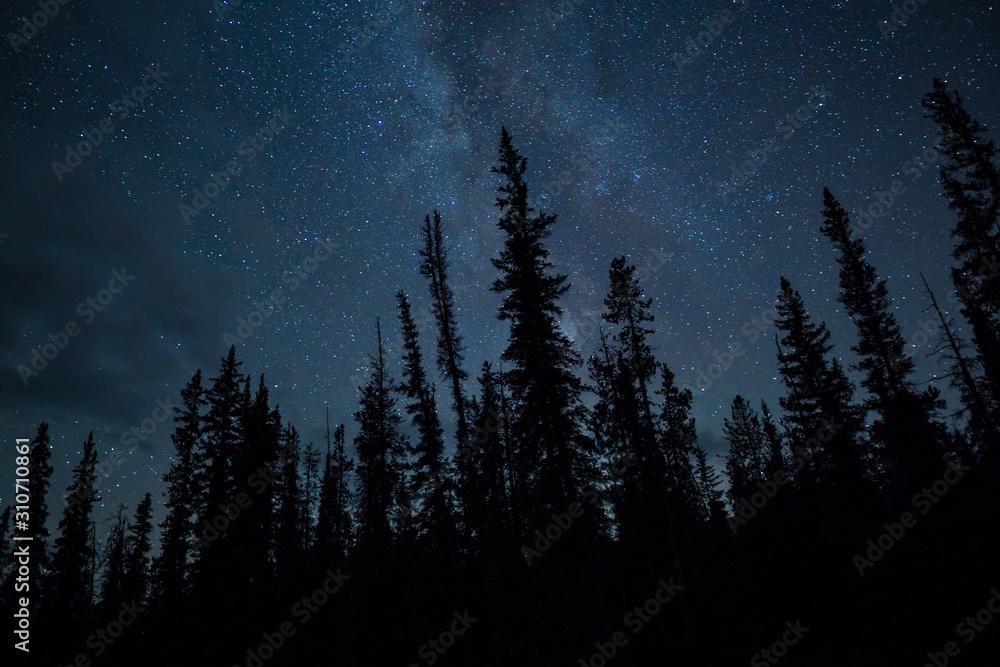 Fototapeta Blue Night Sky Stars And Milky Way With Towering Pine Trees
