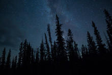 Blue Night Sky Stars And Milky Way With Towering Pine Trees