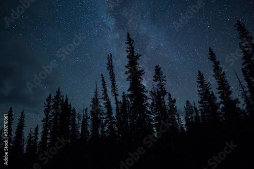 Fototapeta Blue Night Sky Stars And Milky Way With Towering Pine Trees obraz
