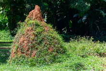 Termite Mound With Vegetation ...