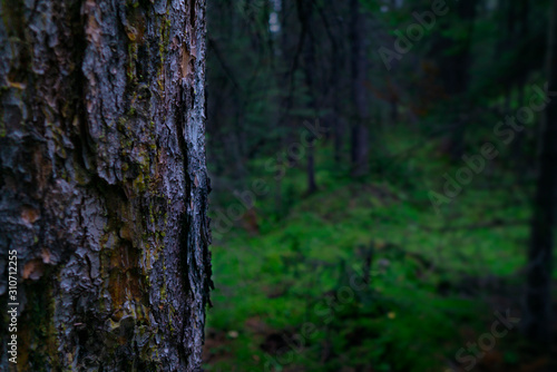 Closeup Tree With Bark In Deep Green Forest Background