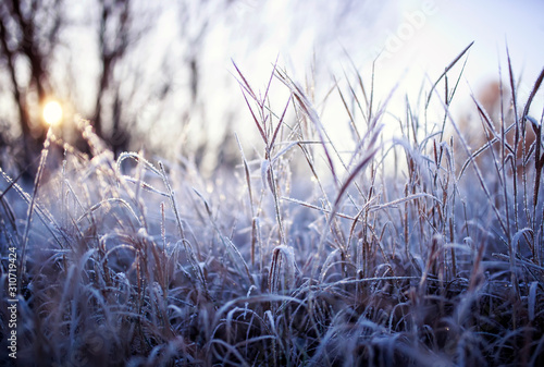 Fotografija natural background with field with dry grass covered shiny transparent crystals