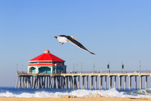Sea Gull Flying In Huntington ...