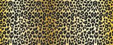 Leopard Background. Seamless P...