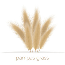 Pampas Golden Grass Copy Space...