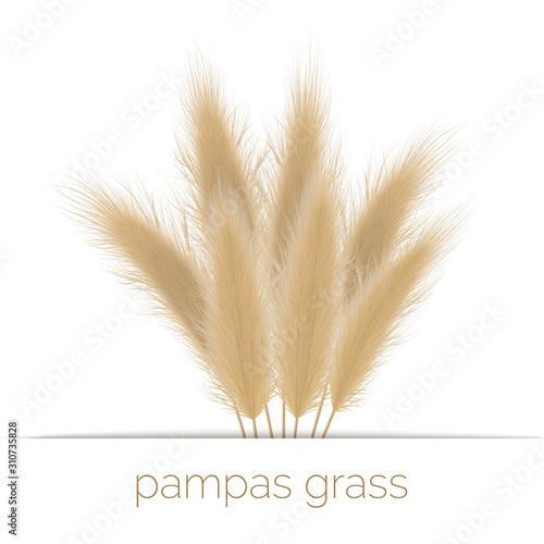 Pampas golden grass copy space on stripe Wallpaper Mural