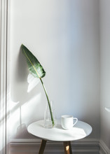 Green Plants With Cup On White Table In Bright Bedroom